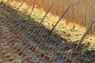 稲を網をかけて守る FYI00319294