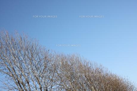 樹木と空 FYI00321653