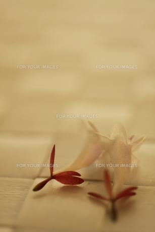 白い花 FYI00321657