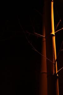 竹のように真直ぐに FYI00321673
