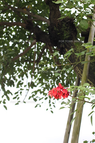 樹木 FYI00321706