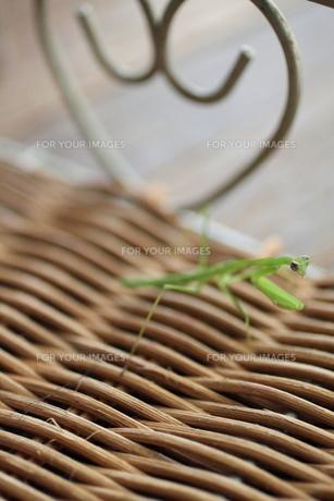昆虫 FYI00321716