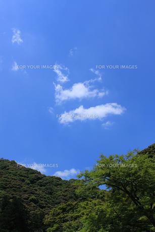 稜線と青空 FYI00321805