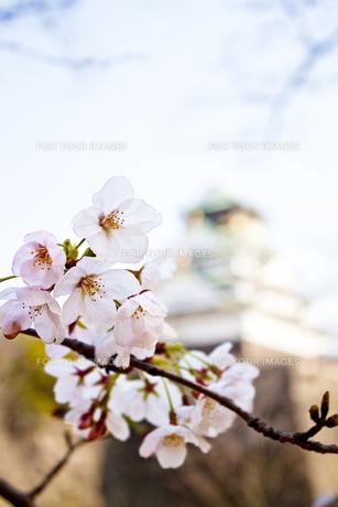 城と桜 FYI00321829