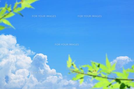 入道雲と緑 FYI00321836