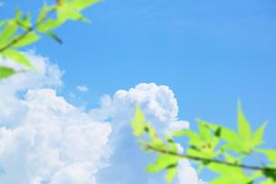 入道雲と緑 FYI00321848