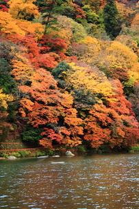 嵐山と保津川 FYI00322080