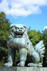 狛犬 FYI00322081