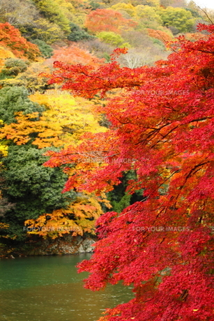 紅葉と川面 FYI00322092