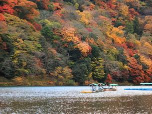 錦秋の嵐山と桂川 FYI00322096