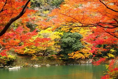 紅葉と川面 FYI00322106