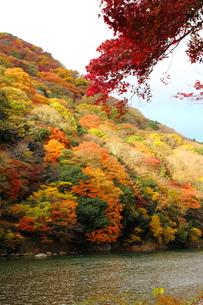 嵐山と保津川 FYI00322116