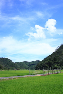 空と山と稲田 FYI00322180