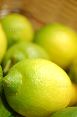 レモン FYI00322491
