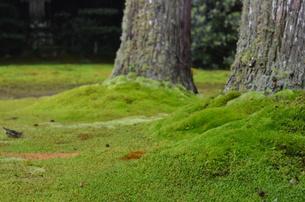 苔のじゅうたん FYI00322537