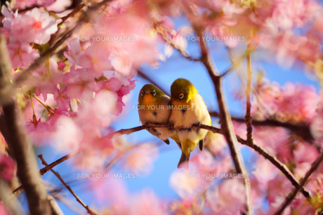 LOVE LOVE FYI00324228