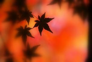 秋色に染まって FYI00324354