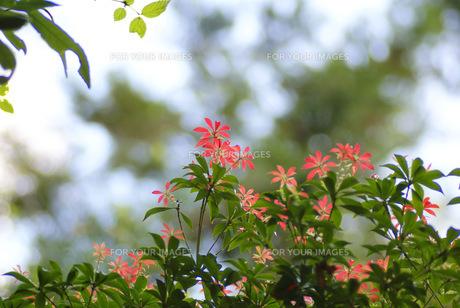 可憐な花 FYI00324356