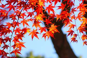 神戸の秋 FYI00324367