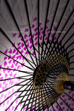 桜和傘 FYI00327735