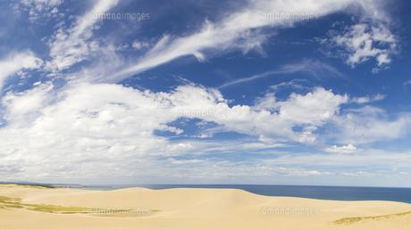 晴れの鳥取砂丘 FYI00327789
