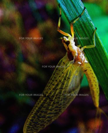 昆虫 FYI00328526
