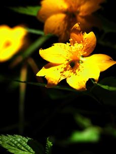 花 FYI00328553