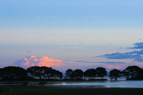 琵琶湖の夕暮れ、帰る水鳥 FYI00331949