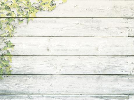 白い板壁に若葉のイラスト FYI00332271