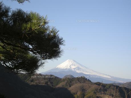 富士山と青空にかかる松 FYI00332307