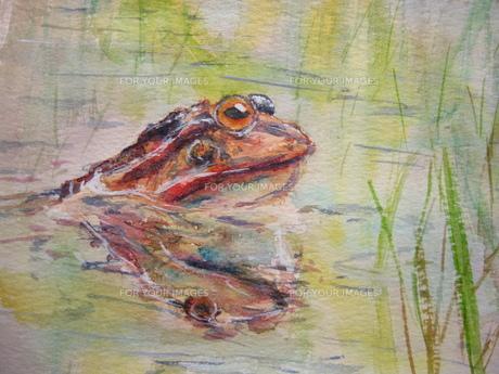 水につかるカエル 「い?湯だな」 FYI00333645