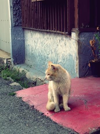 座る野良猫 FYI00333649