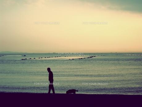 夕焼けの海を散歩する人と犬 FYI00333651
