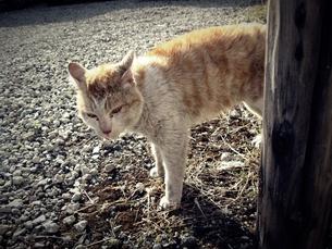 野良猫 FYI00333654