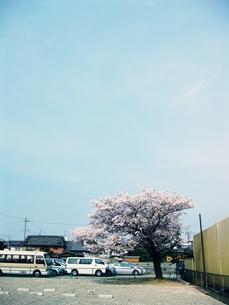 空とサクラ FYI00333670