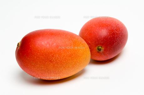 熟したマンゴー FYI00333933