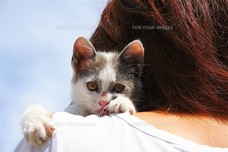 猫と女性 FYI00335539