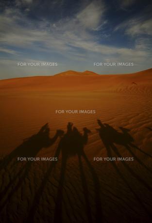 砂漠と影 FYI00336450