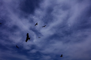 空と鳥 FYI00336469