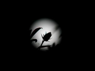 秋の夜 FYI00361731