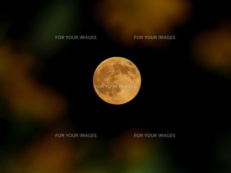 中秋の名月 FYI00361746