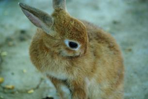 ウサギ年13 FYI00361756