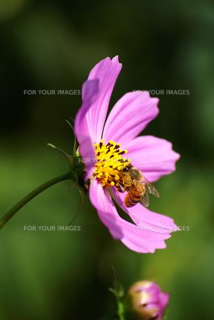 秋の香り FYI00361759