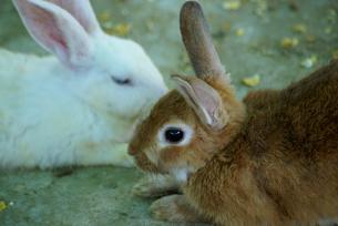 ウサギ年5 FYI00361760