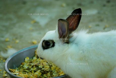 ウサギ年9 FYI00361761