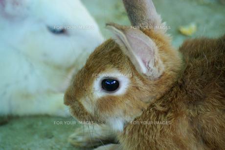 ウサギ年6 FYI00361762