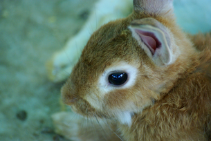ウサギ年8 FYI00361763