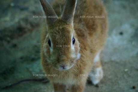 ウサギ年14 FYI00361769