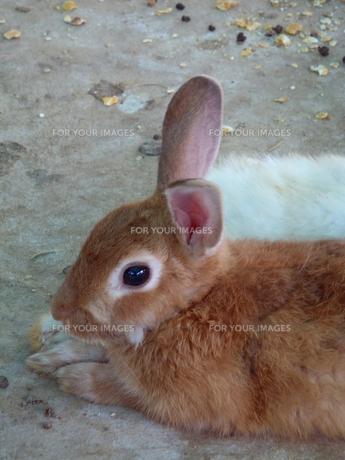 ウサギ年 FYI00361775