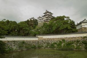 緑に囲まれた姫路城 FYI00364235